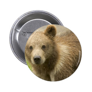 Grizzly Cub Button