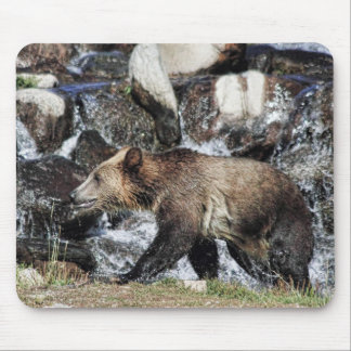 Grizzly Cub Mouse Pad