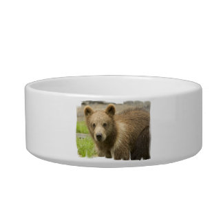 Grizzly Cub Pet Bowl