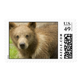 Grizzly Cub Postage Stamp