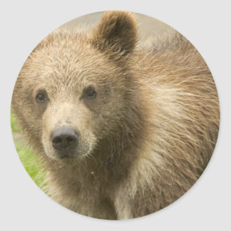 Grizzly Cub  Stickers
