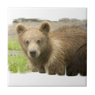 Grizzly Cub Tile
