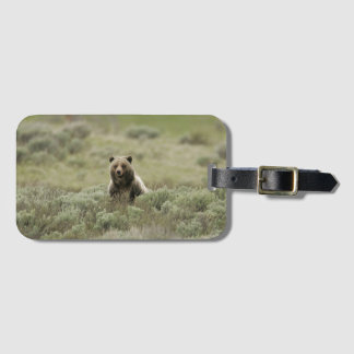 Grizzly Details Bag Tag