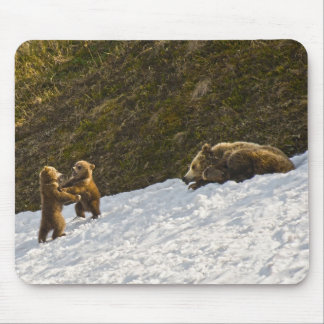Grizzly Family Mouse Pad