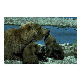 Grizzly Family Posters