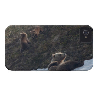 Grizzly Family Scene iPhone 4 Case-Mate Case