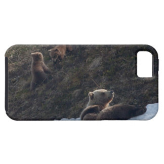 Grizzly Family Scene iPhone SE/5/5s Case