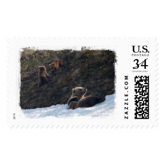 Grizzly Family Scene Postage
