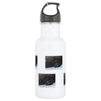 Grizzly Family Scene Stainless Steel Water Bottle