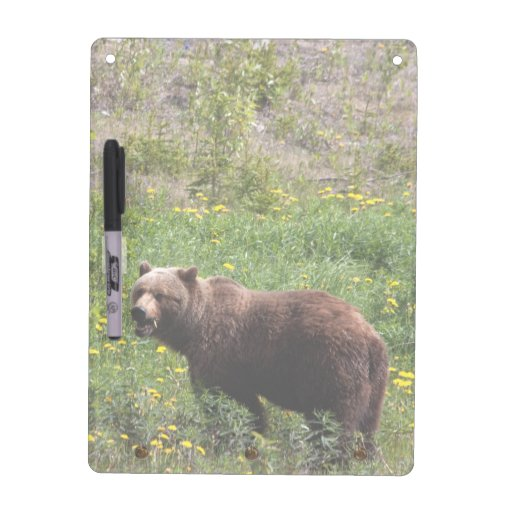 Grizzly in the Dandelions Dry Erase Board
