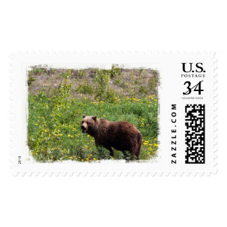 Grizzly in the Dandelions Postage