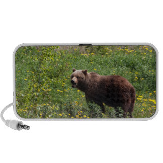 Grizzly in the Dandelions Mini Speakers