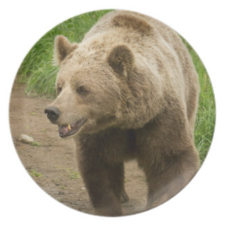 Grizzly Plate