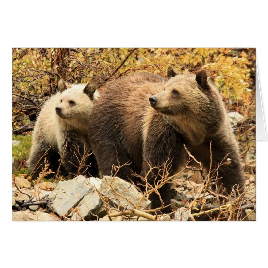 Grizzly Synchro Card