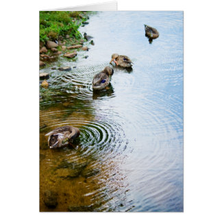 Grooming Ducks 2 Stationery Note Card
