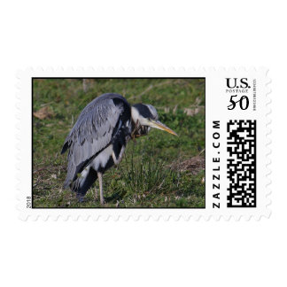 Grooming Heron Postage