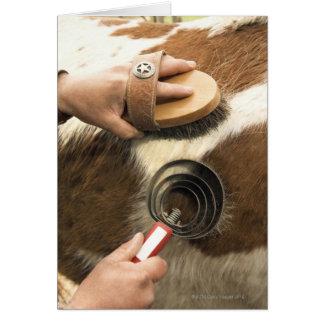 Grooming horse card