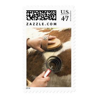 Grooming horse postage