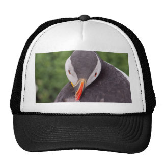 Grooming Puffin Hat
