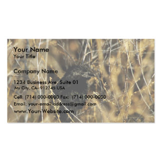 Groove-billed ani business card