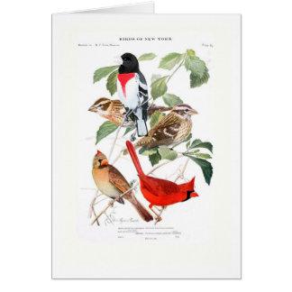 Grosbeak and Cardinal Card