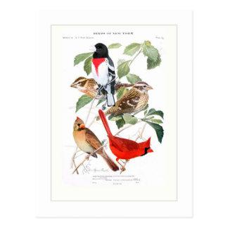 Grosbeak and Cardinal Postcard