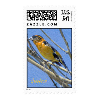 Grosbeck Colored Pencil Drawing Postage