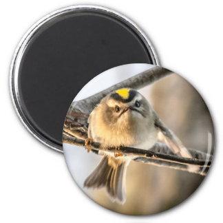 Grouchy Bird 2 Inch Round Magnet