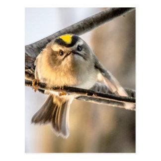 Grouchy Bird Postcard