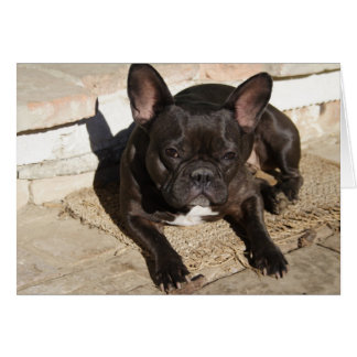 Grouchy French Bulldog Card