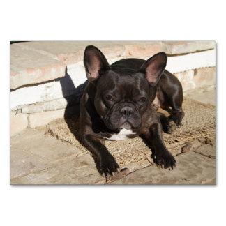 Grouchy French Bulldog Card