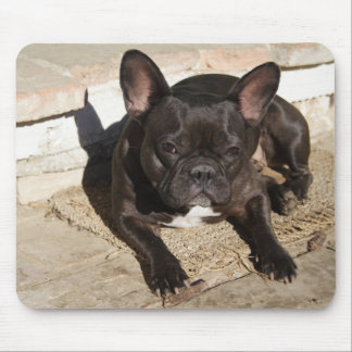Grouchy French Bulldog Mouse Pad