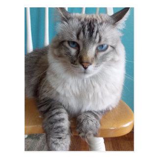 grouchy kitty postcard