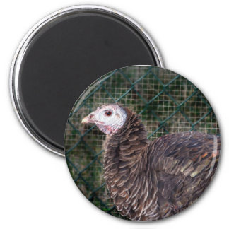 Grouchy turkey hen with ruffled feathers 2 inch round magnet