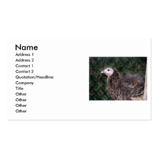 Grouchy turkey hen with ruffled feathers business card templates