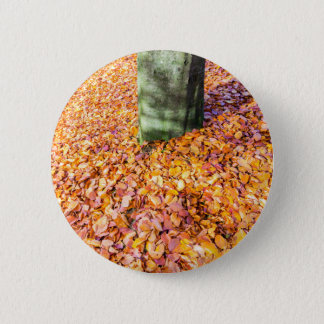 Ground around tree trunk covered with autumn leave button