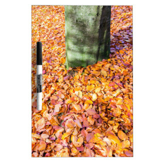 Ground around tree trunk covered with autumn leave Dry-Erase board