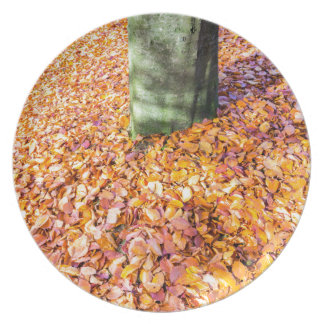 Ground around tree trunk covered with autumn leave melamine plate