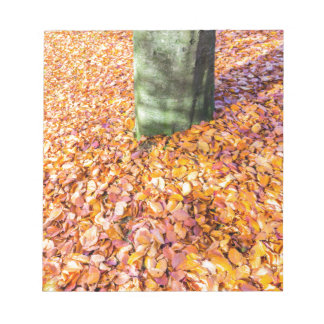 Ground around tree trunk covered with autumn leave notepad