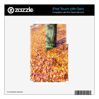 Ground around tree trunk covered with autumn leave skins for iPod touch 4G