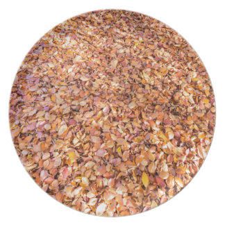 Ground covered with beech tree leaves in autumn melamine plate
