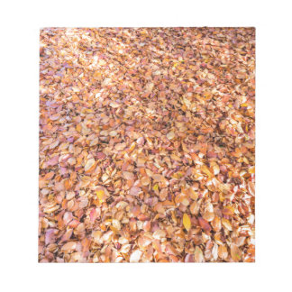 Ground covered with beech tree leaves in autumn notepad