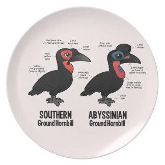 Ground Hornbil Statistics Party Plate