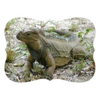 Ground Iguana Reptile Card