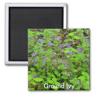 Ground Ivy Magnet