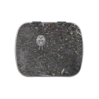 ground owl looking up wild bird animal jelly belly tins