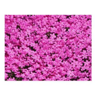 Ground Pink 2 Post Card