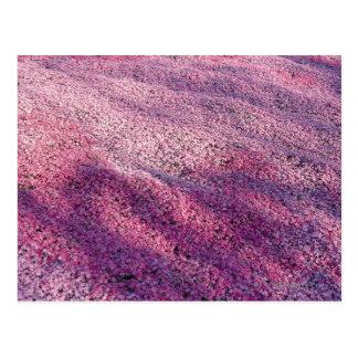 Ground Pink Postcard