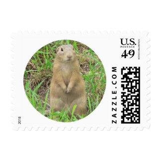 ground squirrel 01 postage stamp