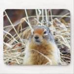 Ground Squirrel#1 Mouse Pad